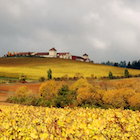 Autumn scene, vineyard, winery buildings