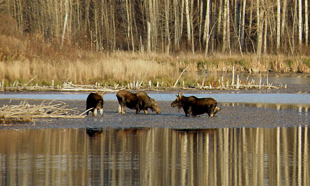 Wayne Millar explains how Elk Island National Park and the Cooking Lake-Blackfoot recreation area offer world-class wildlife photography opportunities.