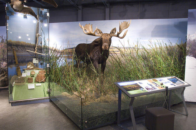 Mackenzie River diorama with a life sized moose at the PWNHC.