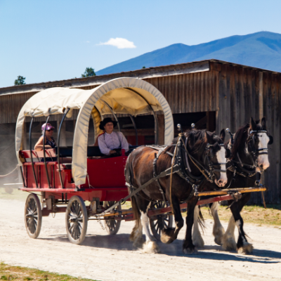 A red wagon with a white linen roof holds passengers as two brown and white Clydesdale horses stroll through Fort Steele
