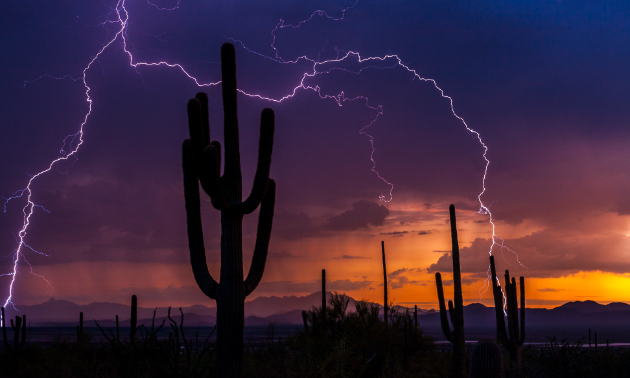 A monsoon storm produced a forked lightning bolt near the Red Hills Visitors Center at Saguaro National Park.
