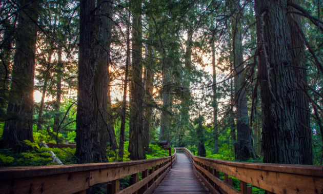 The Ancient Forest boardwalk loops around B.C.'s newest provincial park.