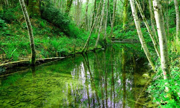 A serene river setting