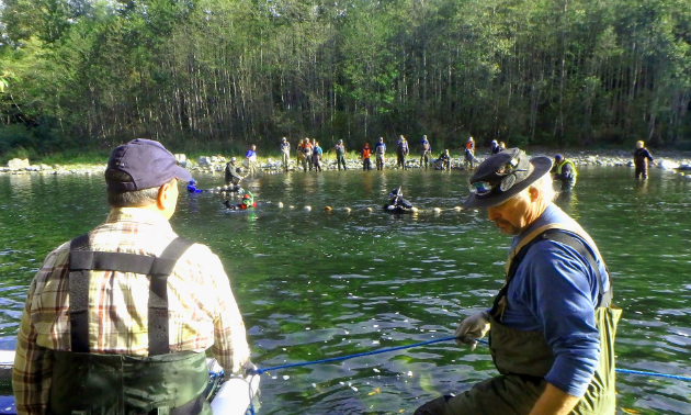 The Oyster River Enhancement Society takes broodstock from the river.