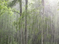 A forest in the pouring rain.