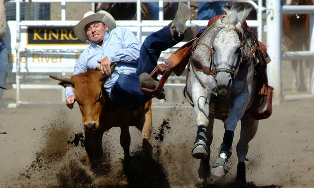 A cowboy grabbing the horns of a steer as he is coming off his horse.