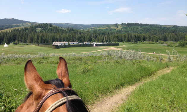 Looking between a horse's ears at Fort Walsh.