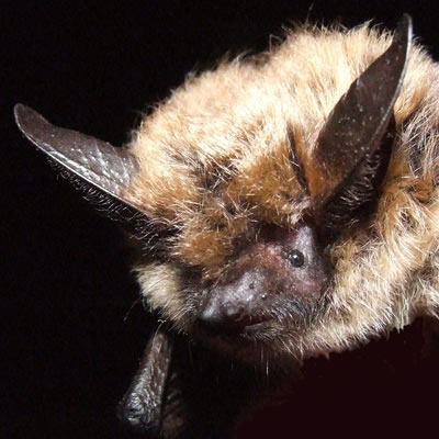 Close-up of bat.