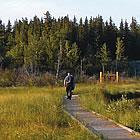 people walking along a boardwalk