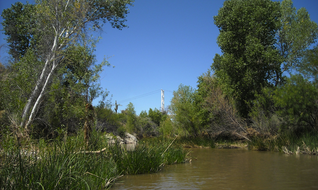 trees, river, blue sky
