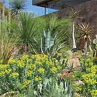 a garden of numerous kinds of cacti and succulents