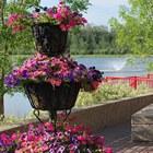 Lakeside walkway with three-tiered planter full of pink blossoms; lake, trees and fountain in the background