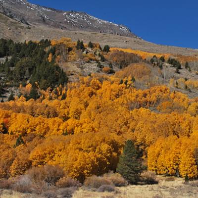 California boasts some magical autumn scenery.