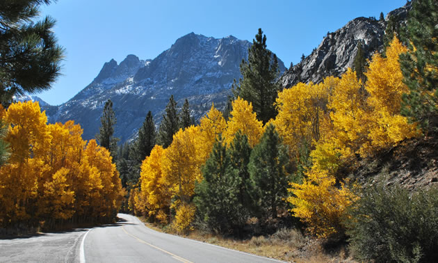 Autumn is a perfect time for a California road trip, with nature's glory in full colour.