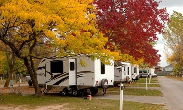 A row of campers in an RV park, with colourful red and yellow autumn trees lining the RV lots.