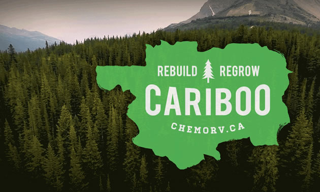 Graphic showing 'Rebuild - Regrow' promotion, with picture of forest in background.