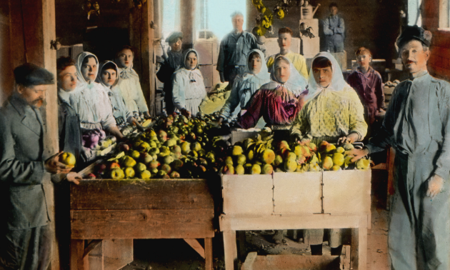 Canadian Doukhobors were known as good orchardists, shown here in 1925.