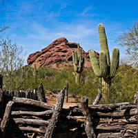 A desert mountain and saguaro cacti are behind a rustic fence.