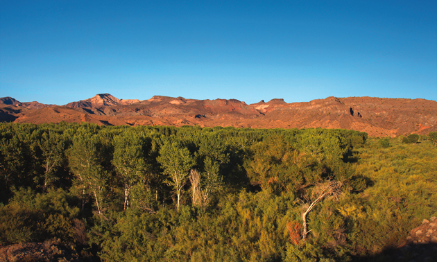 trees in foreground, red mountains behind and blue sky