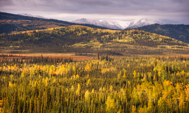 Fall colours beginning to show along the Alaska Hwy between Kluane Lake and Whitehorse, YT on the return trip to the lower 48.