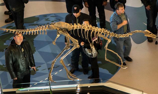 A fossilized skeleton model.