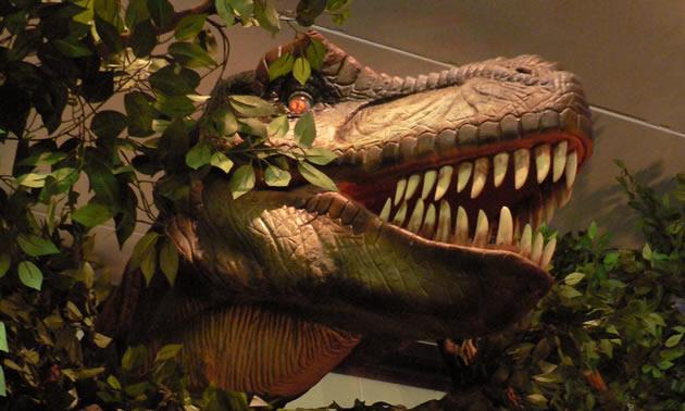 Close-up of animatronic T-Rex.