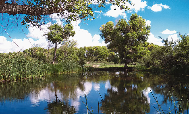 scenic photo of sanctuary with water and trees