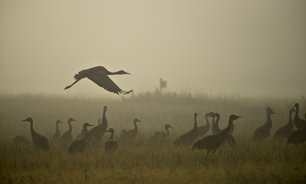 Creamer's Field Migratory Waterfowl Refuge is comprised of approximately 2000 acres of fields, woods, and wetlands.