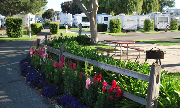 Bed of flowers in foreground with campers in background in RV Park.