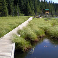 Beaver Boardwalk stretches through marshy area with a tower and seating area in the background.