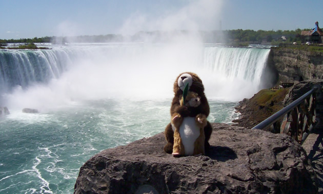 Two marmot stuffed animals in front of Niagara Falls