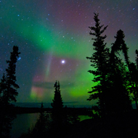Evergreens against a night sky lit in green and violet by the aurora borealis