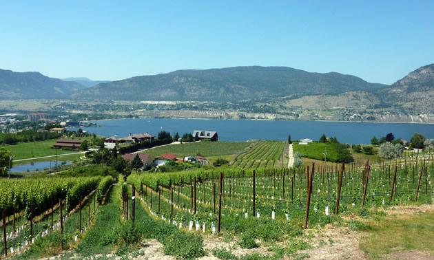 View from a Naramata winery.
