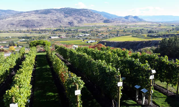 A winery in Osoyoos