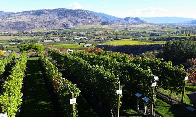 Stunning Osoyoos scenery is just part of the tour.
