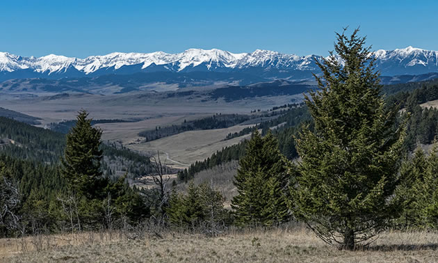 Scenic view of rolling hills and grasslands, with snow-capped mountains in background.