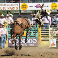 rider bucked off horse at red bluff roundup