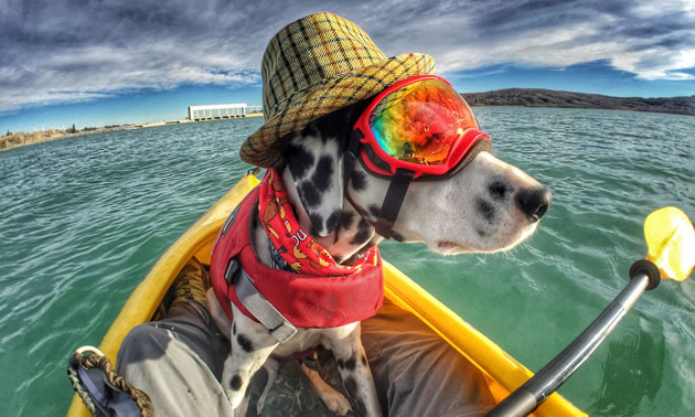 Shadow the Dalmatian is sitting in a kayak and wearing rainbow-coloured googles, a hat, a scarf and a life vest.