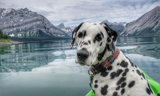 Traveler the Dalmatian is in the front of a kayak with gorgeous mountain views in the distance.