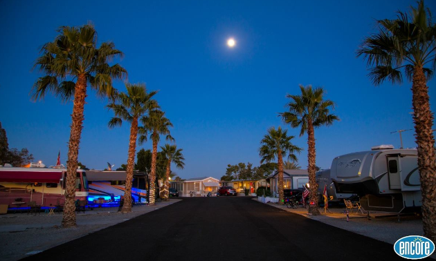 Palm trees down a road at an Encore RV Resort