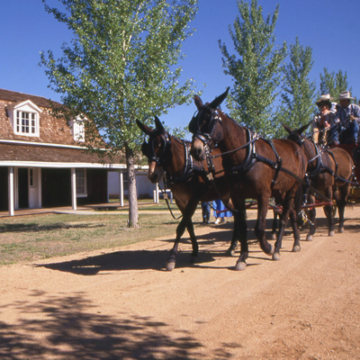 Horses pulling a cart in front of one of Fort Verde's historic buildings.