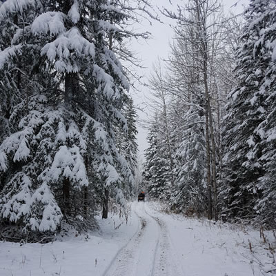 This trail is in the Windfall area, where the Whitecourt ATV Club has acquired Temporary Field Authorization to ride while they work on more permanent trails.