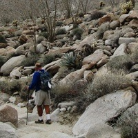 A man hiking on one of the many trails in Anza Borrego State Park.