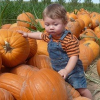 A Baby standing surrounded by pumpkins.