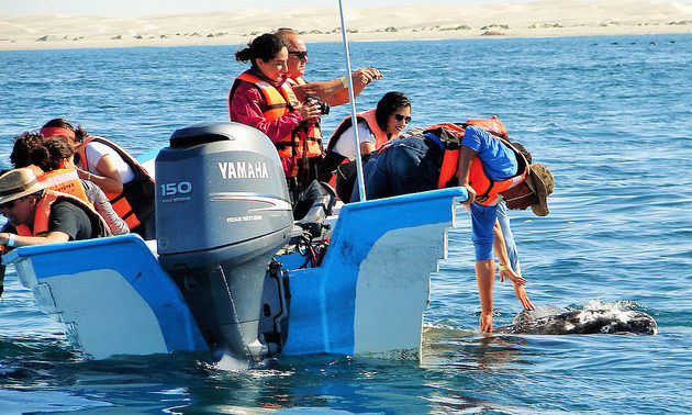 A small motor boat with 10 people on board.  Two people are leaning over to touch a whale that is alongside of the boat.