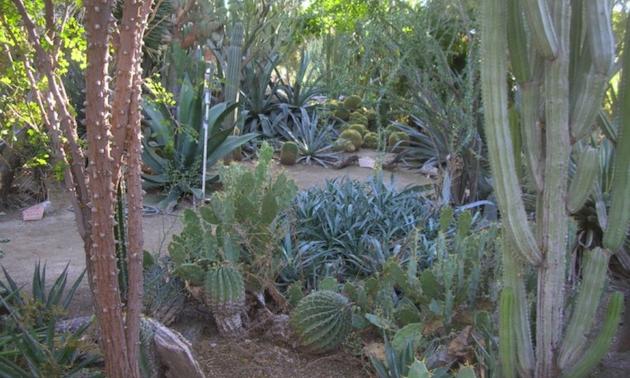 Moorten Botanical Garden. Palm Springs, California.