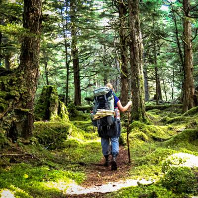 A trail through old growth forest at Camp Fife, Haida Gwaii, BC.