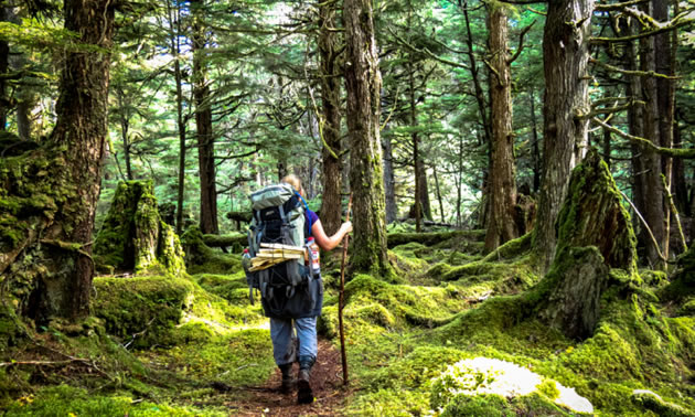 A trail through old growth forest at Camp Fife, Haida Gwaii, BC.