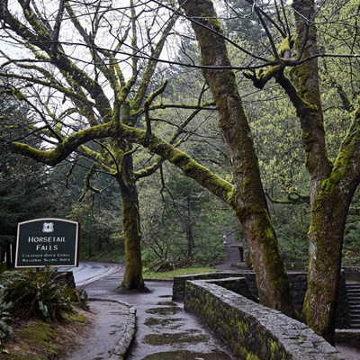 The temperate rain forest climate makes for a very green and wet environment.