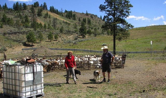 Conrad and Donna Lindblom with their goats.